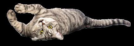 cat on back